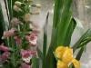 rosemary-&-thyme_1x3_047