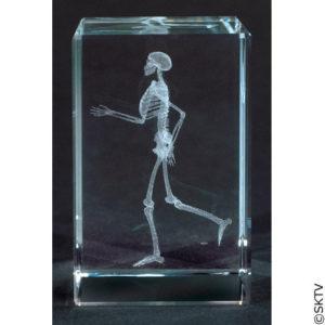 presse-papier-squelette