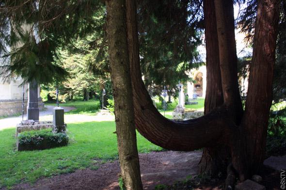 Cimetière St. Sebastian de Salzbourg : beaux arbres...