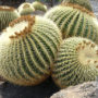 Coussin cactus inspiration tropicale
