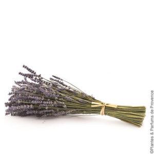 Coussin lavande Provence : bouquet de fleurs de lavande lié avec du raphia
