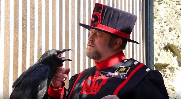 Le Ravenmaster Chris SKAIFE, posant ici avec un corbeau...